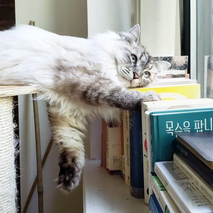 Foto para instagram de un gatito