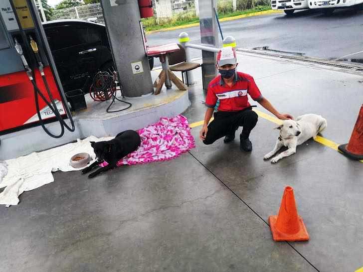 Joven en gasolinera arropa a perros callejeros