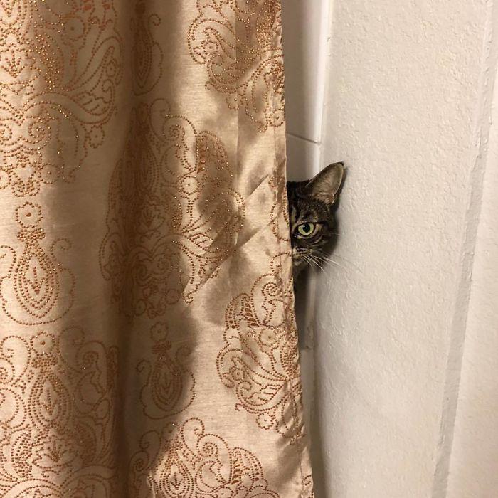 Kitzia grumpy cat