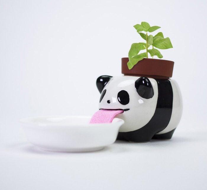 Maceta de panda que bebe agua