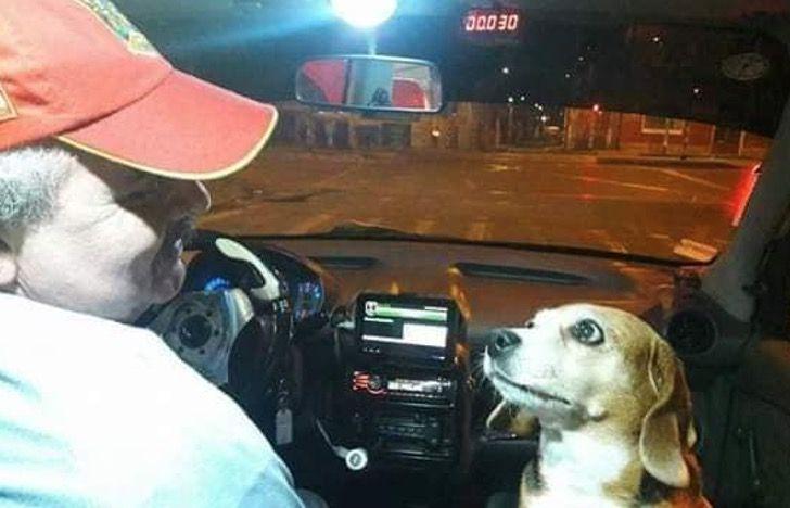 Perrita princesa y su dueño trabajando en un taxi