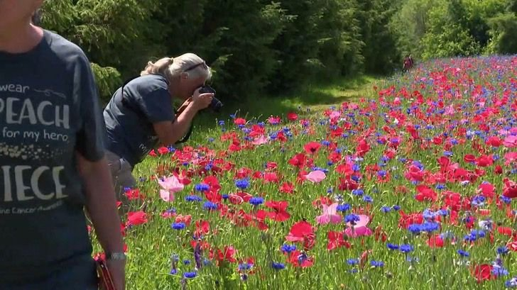 Mujer tomando fotos en un campo de amapolas