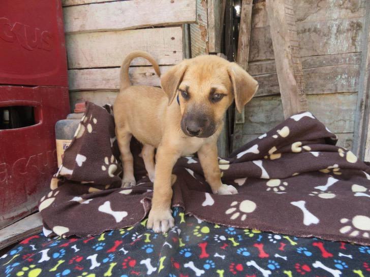 Cachorro de tres meses que fue abandonado en la puerta de una casa