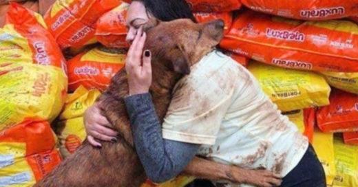Dona comida a albergue y perrito le agradece con un abrazo