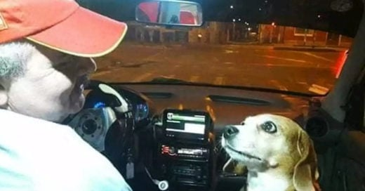 Princesa es la perrita copiloto que acompaña a su dueño a trabajar en un taxi