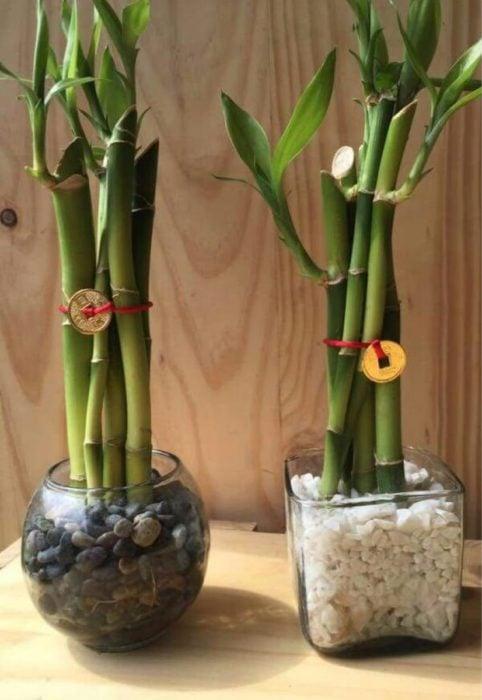 Peceras con piedritas y bambú