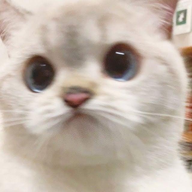 Nana, la gatita con las expresiones más lindas del mundo