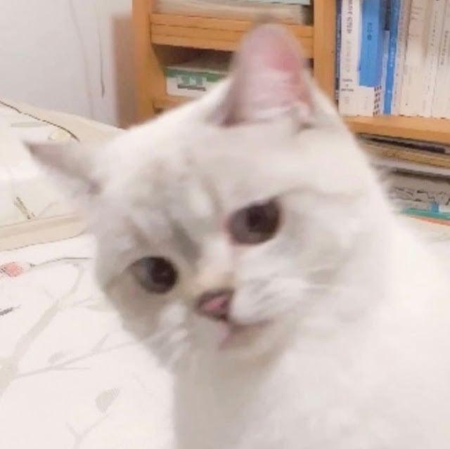 Nana, gatita con cara muy expresiva
