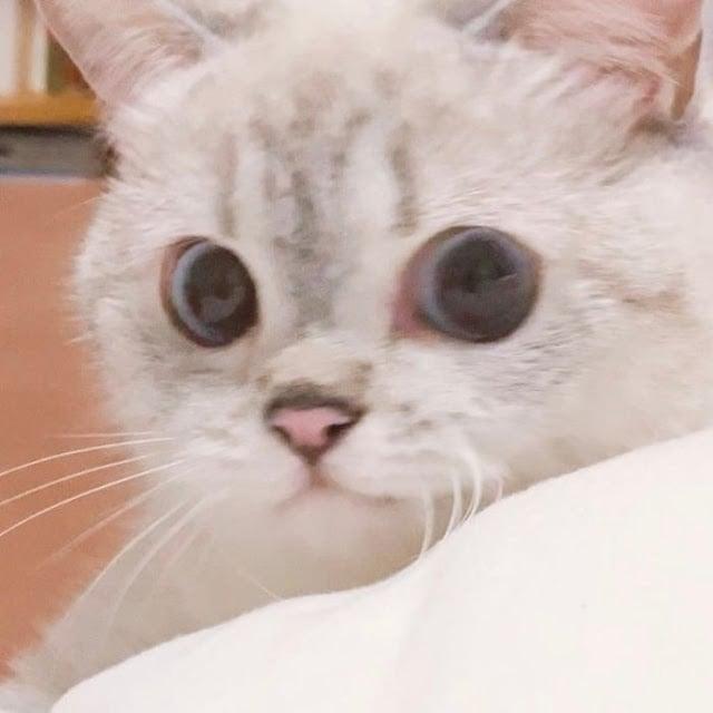 Ella es Nana, la gatita más expresiva de todo internet