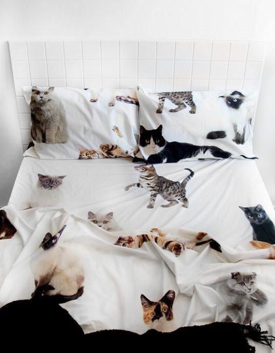 Juego de sábanas de gatos