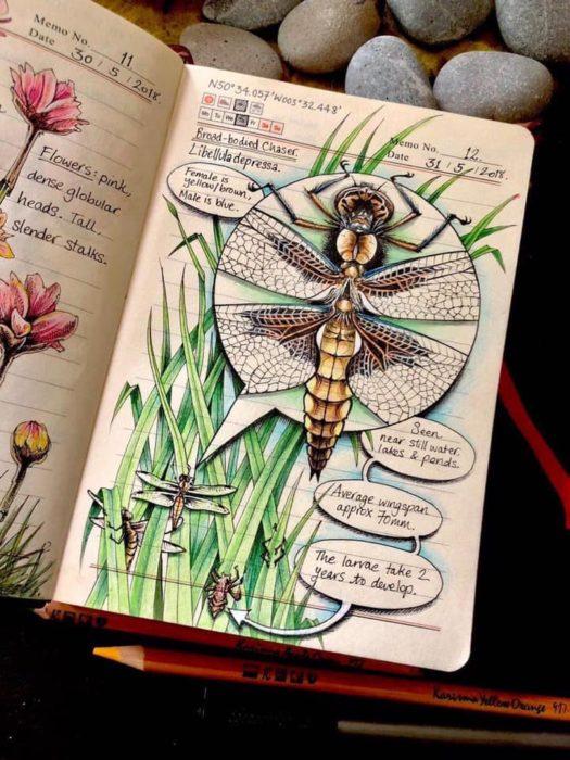 Dibujo de una libelula realizado por Jo Brown con lapices de colores