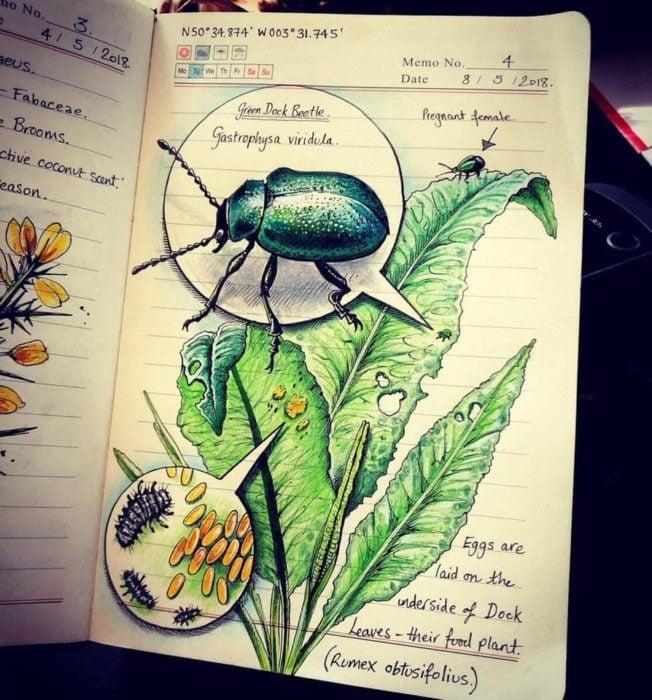 Dibujo de un escarabajo verde realizado por Jo Brown con lapices de colores
