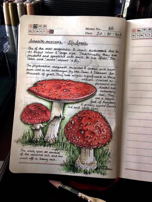 Dibujos de hongos rojos realizado por Jo Brown con lapices de colores
