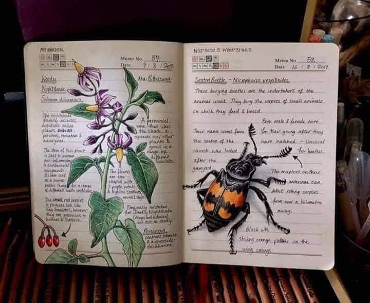 Dibujo de una abeja realizado por Jo Brown con lapices de colores