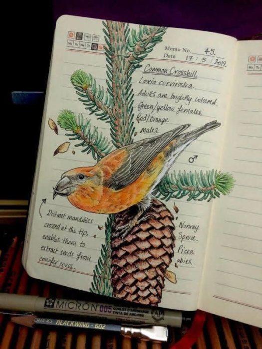 Dibujo de un ave amarilla realizado por Jo Brown con lapices de colores