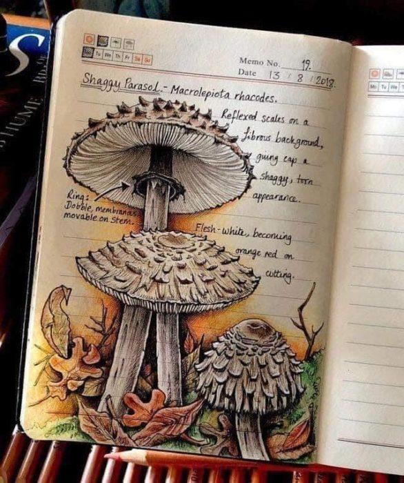 Dibujo d ecetas cafés realizado por Jo Brown con lapices de colores