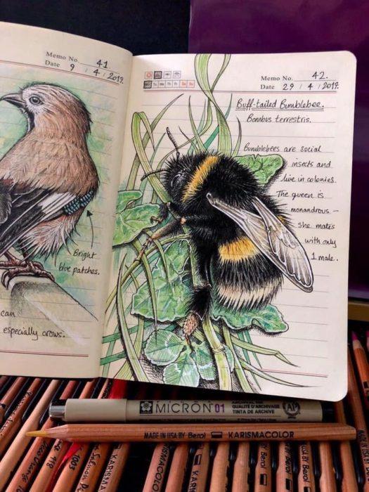 Dibujo de un abejorro realizado por Jo Brown con lapices de colores