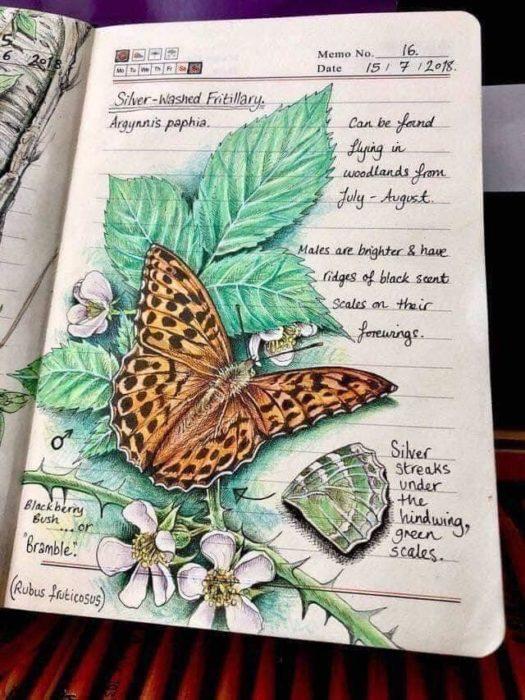 Dibujo de una mariposa monarca realizado por Jo Brown con lapices de colores