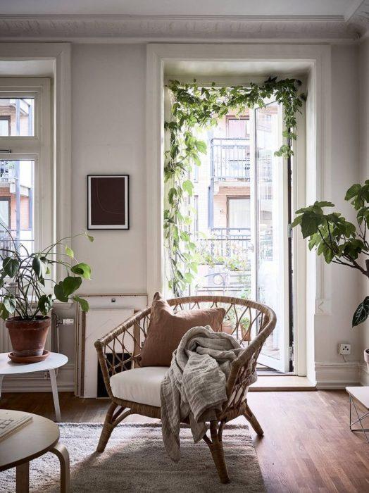 Planta enredadera decorando el marco de una puerta