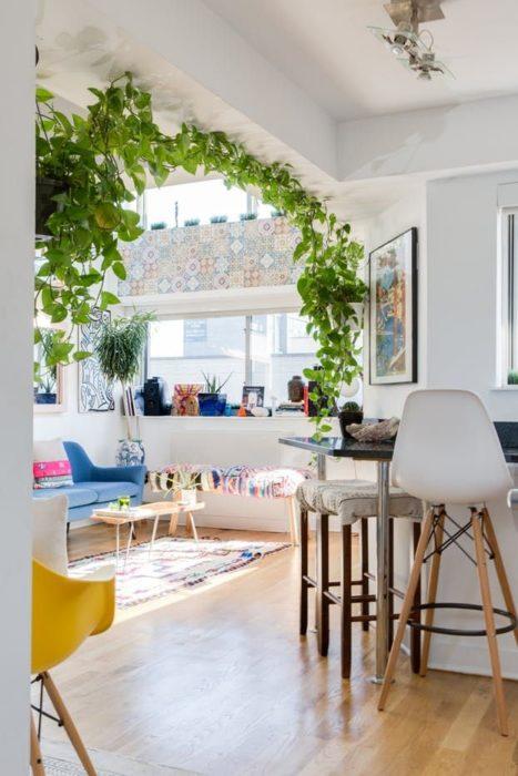 Planta enredadera decorando el arco que divide dos habitaciones