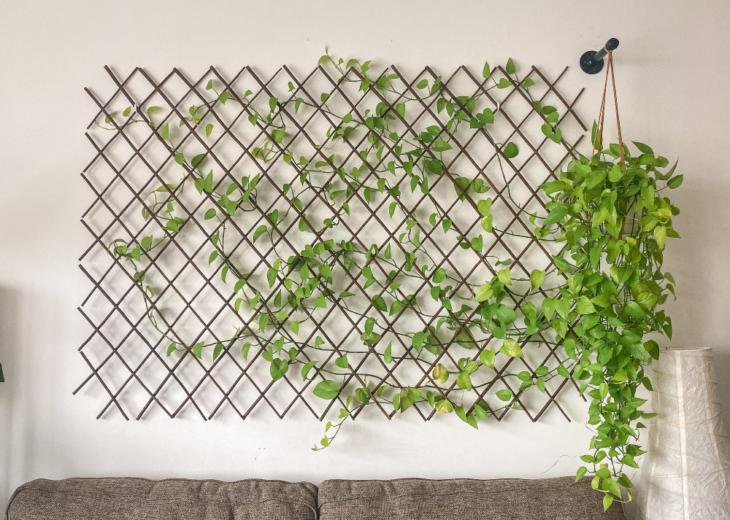 Planta enredadera decorando pared montado en moldura de rombos