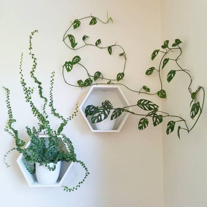 Planta enredadera decorando pared
