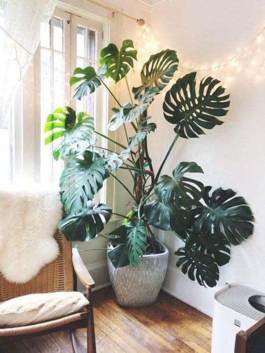 Maceta de planta grande decorando esquina de departamento