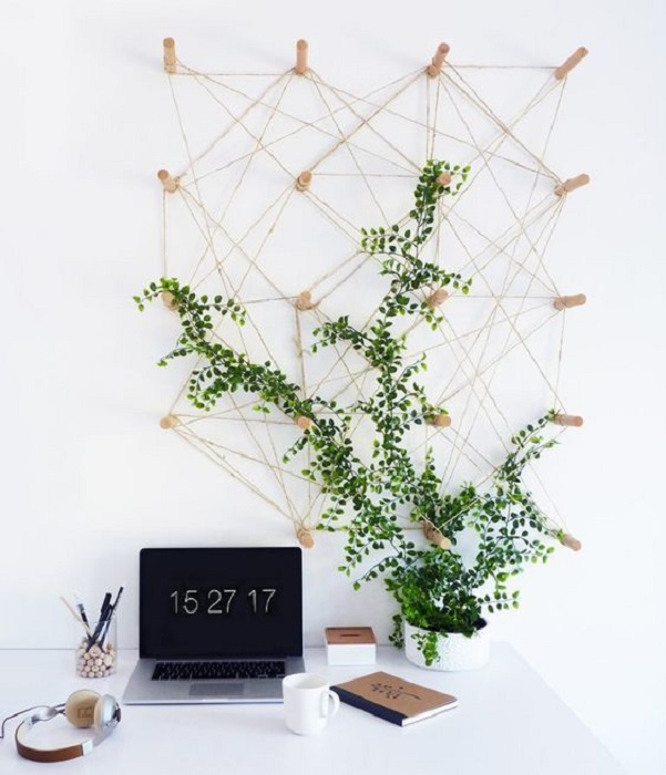 Planta enredadera decorando pared de estudio