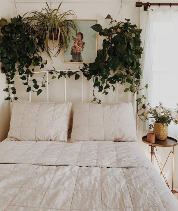 Planta enredadera decorando cabecera de cama