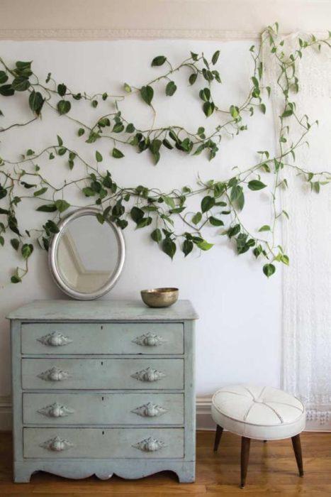 Planta enredadera decorando pared que tiene un espejo