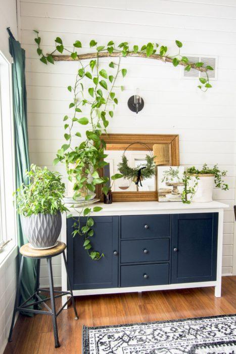 Planta enredadera decorando pared de habitación