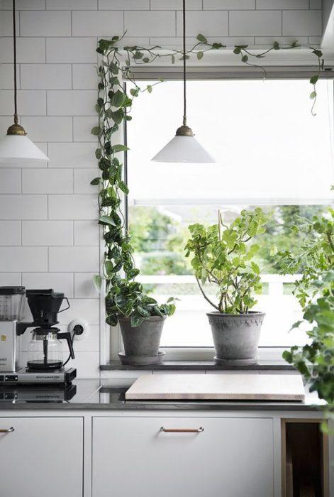 Planta enredadera decorando la ventana de una cocina