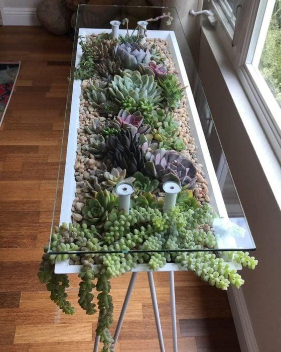 Mesa con terrario