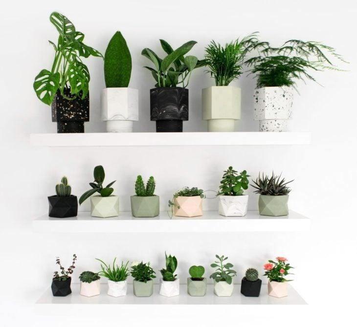 Repisas con macetas con plantas pequeñas