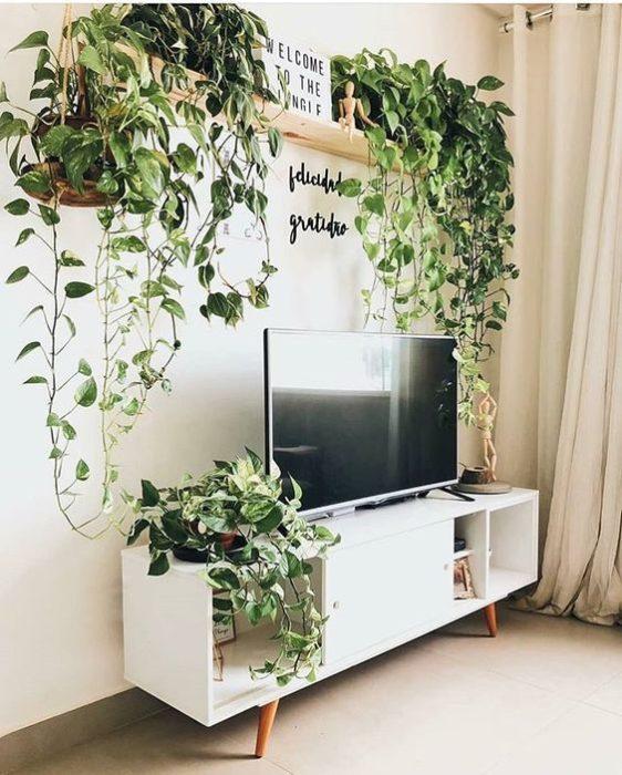 Sala de TV con plantas