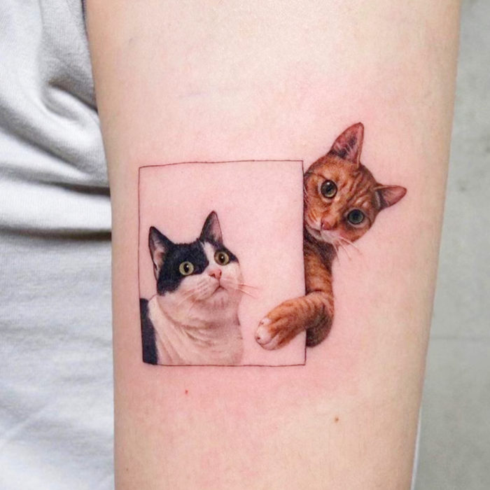 Cat tattoos; Orange and black feline arm tattoo with white