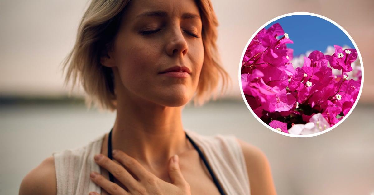 13 Beneficios de la flor de bugambilia