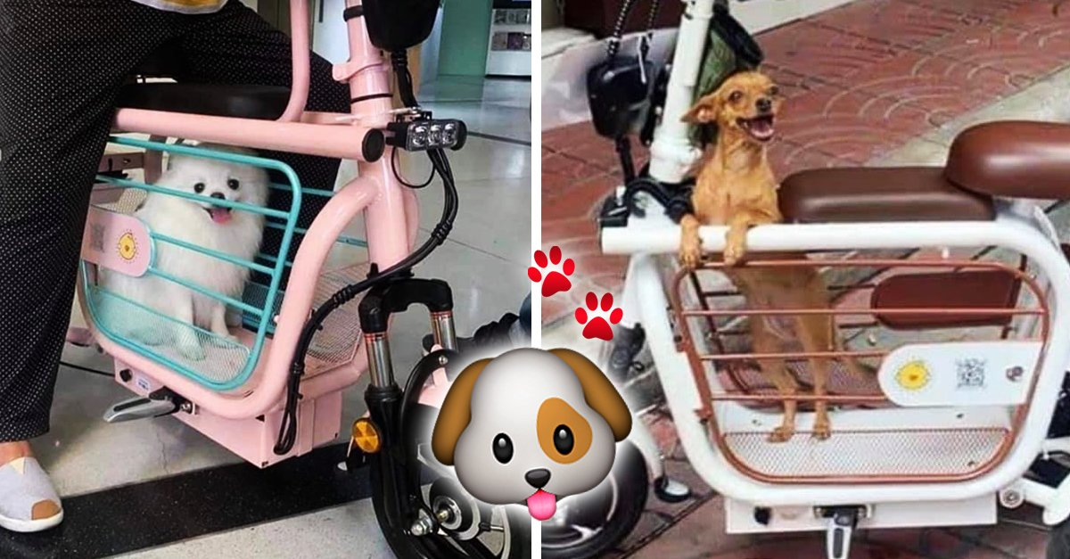Esta motoneta para transportar a tu mascota es lo más tierno que verás hoy