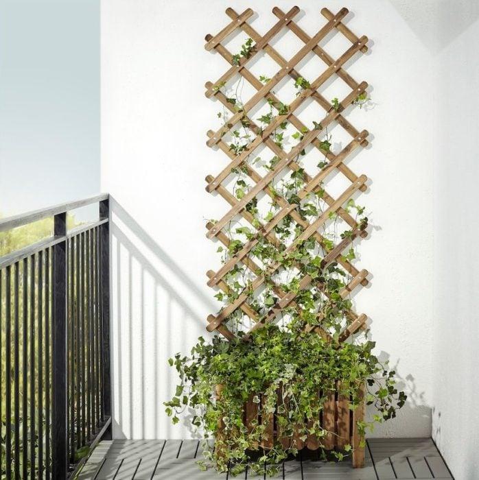 Enredadera en soporte creciendo en balcon