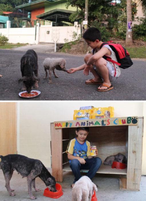 peuqeño alimenta y hace casas para los perritos sin hogar