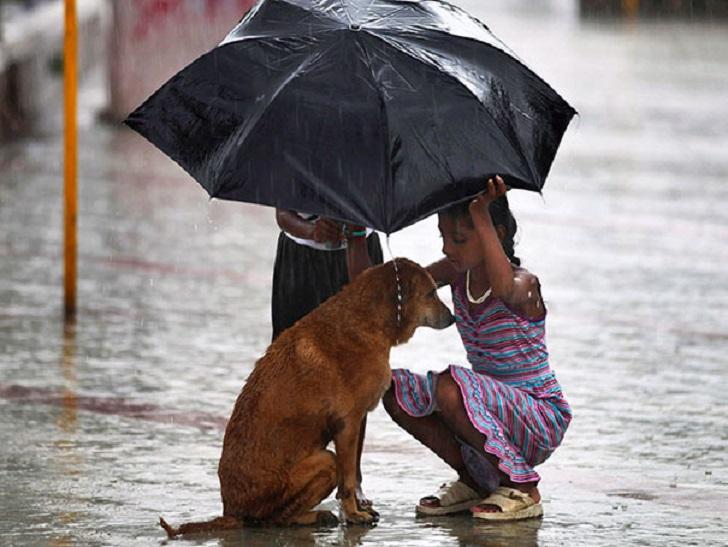 Pequeños abren paraguas y cuidan de que un perrito no se moje