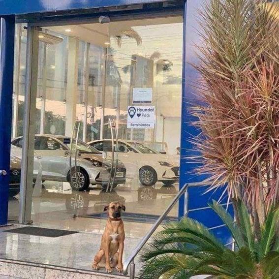 Perrito callejero sentado fuera de una agencia de autos Hyundai