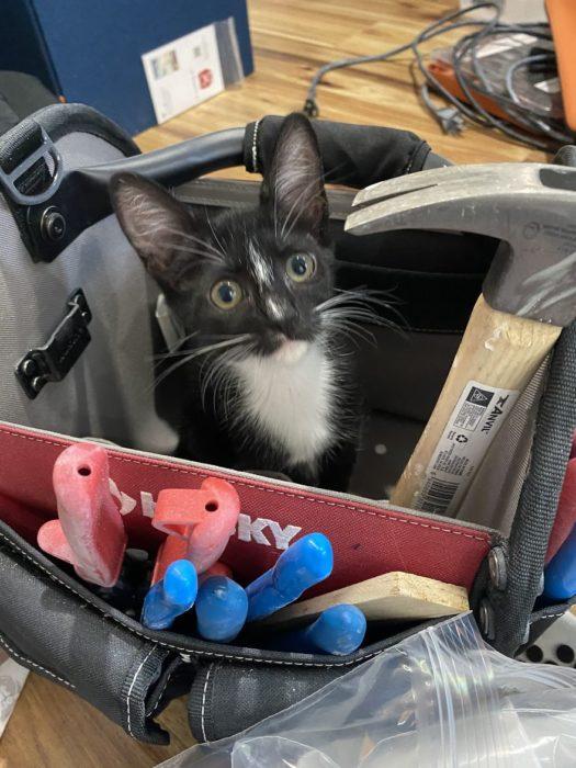 Gato dentro de una caja de herramientas