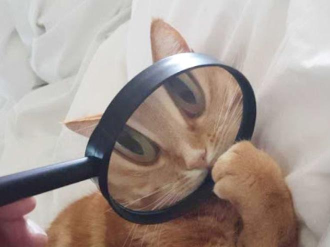 Fotografía distorsionada de gatito a través de un vaso de una lupa