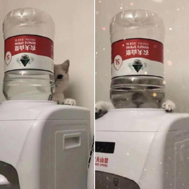 Fotografía distorsionada de gatito a través de un garrafón de agua