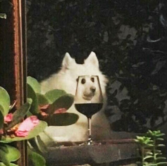 Fotografía distorsionada de perro blanco a través de una copa de vino