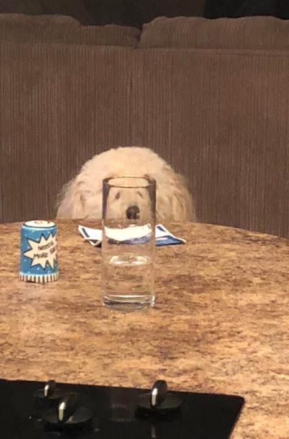 Fotografía distorsionada de perro blanco a través de un vaso de cristal