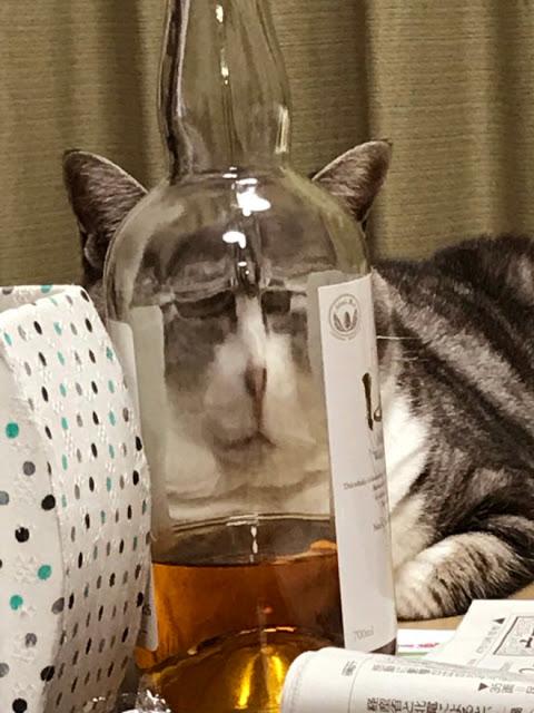 Fotografía distorsionada de gatito a través de una botella de alcohol