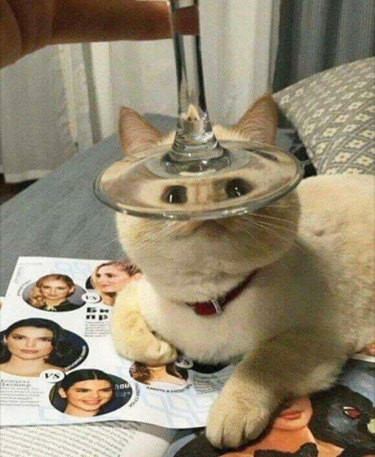 Fotografía distorsionada de gatito a través de la base d euna copa de vino
