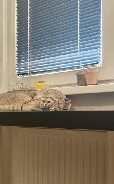 Fotografía distorsionada de gatito a través de unos lentes de aumento